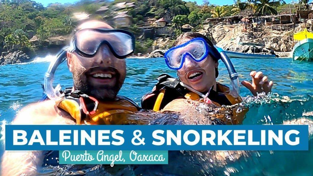 Croisière aux baleines et snorkeling à Puerto Ángel, Oaxaca